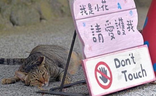 Nơi loài mèo được cưng chiều nhất thế giới