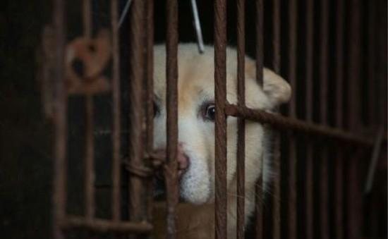 Hong Kong (Trung Quốc) siết chặt luật cấm ngược đãi vật nuôi