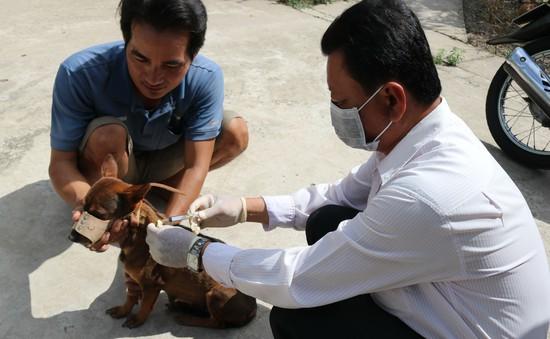 Chó dại lại liên tiếp tấn công nhiều người ở Cà Mau