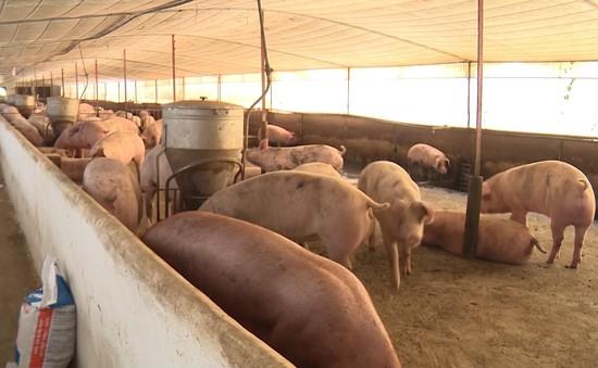 Thịt lợn tăng giá trở lại sau khi 3 tỉnh công bố hết dịch