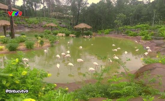 Khám phá vườn thú lớn nhất Việt Nam