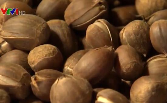 Lào Cai bắt giữ 440 tấn hạt dẻ không rõ nguồn gốc