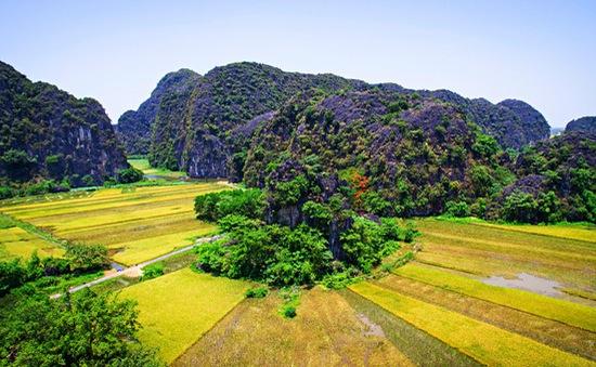 Ngắm mùa vàng Tam Cốc từ đỉnh Hang Múa