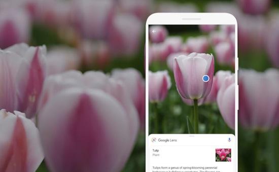 Google Lens cập nhật bộ lọc ảnh mới trên Android và iOS