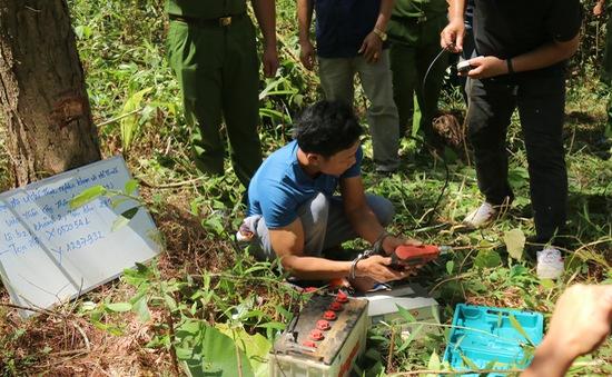Khởi tố kẻ chủ mưu phá 10ha rừng thông ở Lâm Đồng