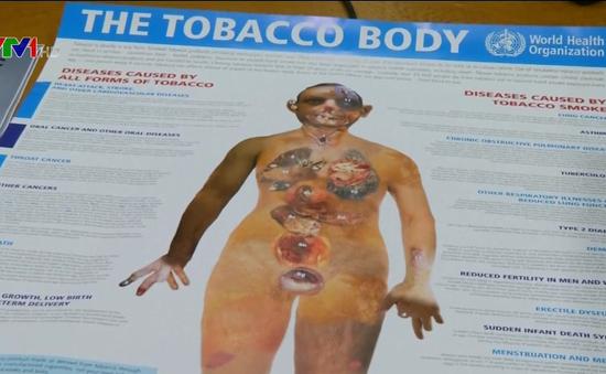 8 triệu người tử vong mỗi năm vì thuốc lá