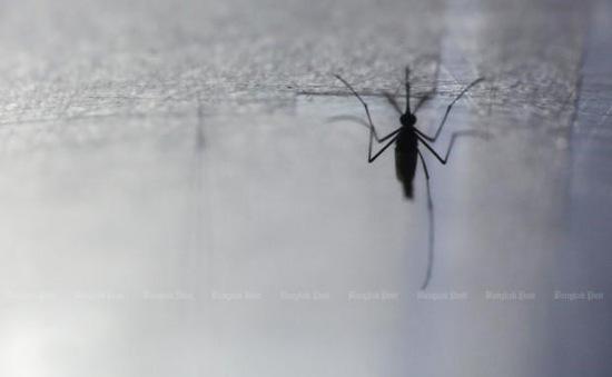 Thái Lan tích cực kiểm soát dịch sốt Chikungunya lây truyền qua muỗi