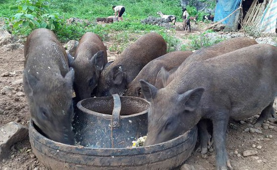 Sẽ sửa quy định về danh mục sản phẩm thức ăn chăn nuôi