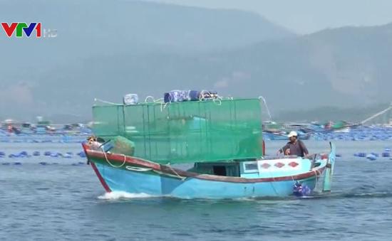 Khó di dời lồng bè nuôi thủy sản ở Cam Ranh