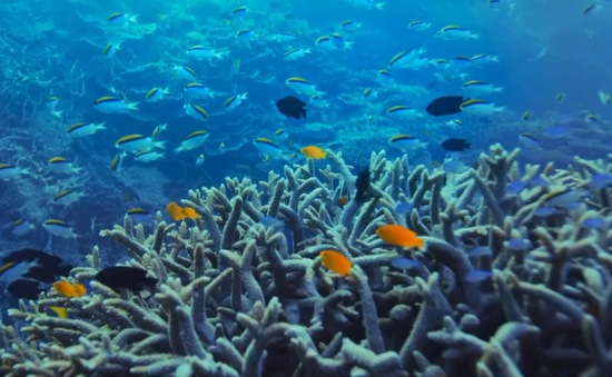 Khám phá những địa điểm độc đáo dưới đại dương