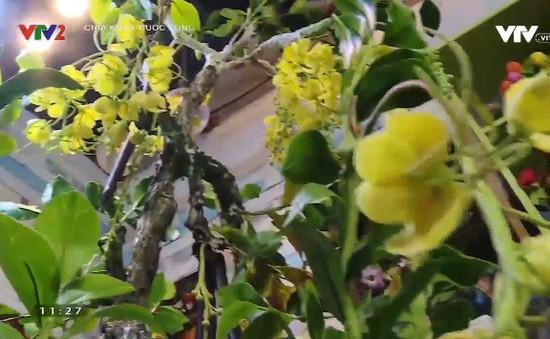 Ngỡ ngàng trước cây bonsai bò cạp vàng cao 2,5m từ đất sét