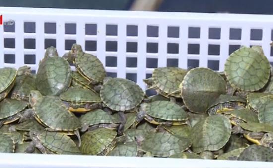 Malaysia thu giữ hơn 5.000 con rùa nhập lậu
