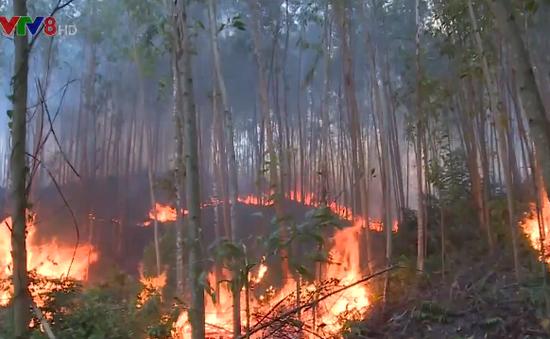 Liên tiếp xảy ra cháy rừng tại Phú Yên