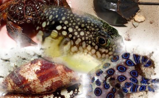 Mùa hè đi biển cần tránh những hải sản này