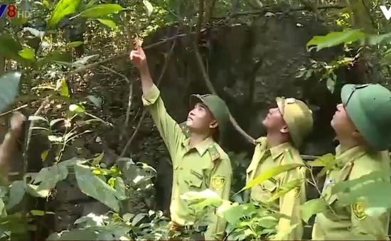 Quảng Bình: Nhiều cán bộ bảo vệ rừng xin nghỉ việc