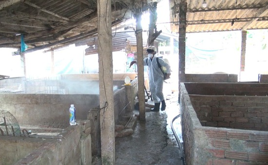 Đồng Thápđề nghị hỗ trợ 58 tấn thuốc tiêu độc khử trùngdập dịch tả heo Châu Phi