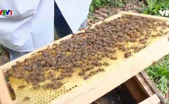 Buổi sáng ở trại nuôi ong