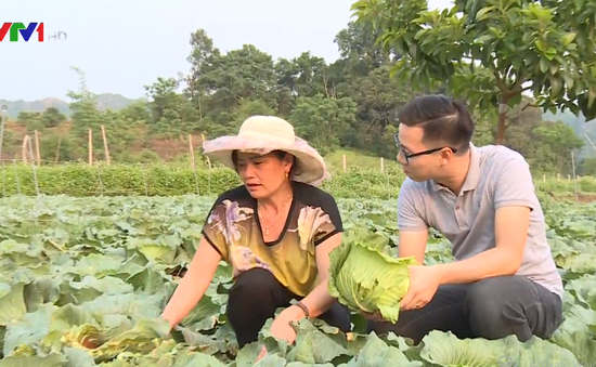 Khám phá nông trại trồng rau trái vụ tại Mộc Châu