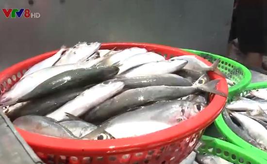 Đà Nẵng tăng cường truy xuất nguồn gốc hải sản