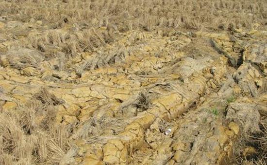 Diện tích bị khô hạn ở miền Trung đang tăng lên từng ngày