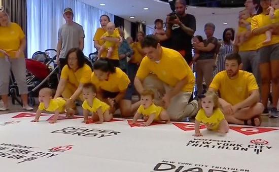 Thú vị cuộc thi bò của những em bé tại Mỹ