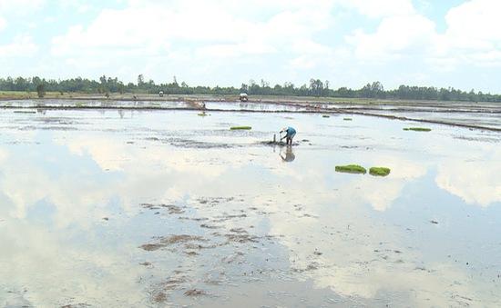 Khi nông dân ngại trồng lúa