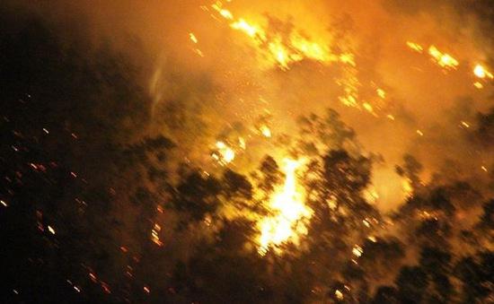 Cháy rừng ở Bình Định có thể do người dân đốt ong lấy mật