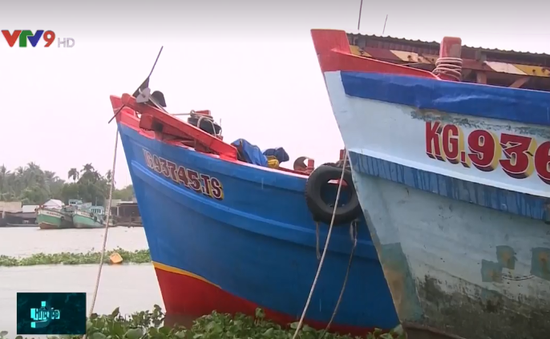 Thiếu hụt nguyên liệu, nhiều nhà máy hải sản đứng trước nguy cơ đóng cửa