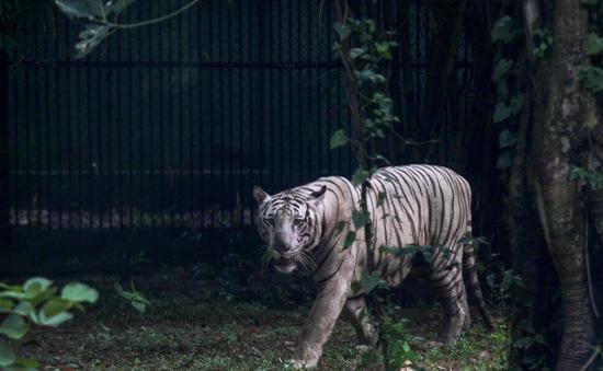 EU chi 10 triệu Euro bảo tồn động vật hoang dã vùng Mekong