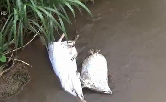 Đồng Nai: Xử lý tình trạng đổ trộm xác heo chết ra môi trường