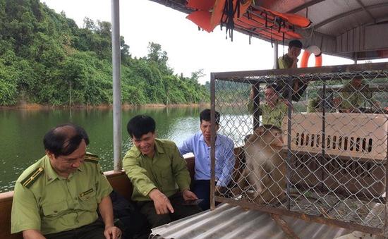 Hà Tĩnh thả 12 cá thể khỉ thuộc nhóm nguy cấp quý hiếm về rừng