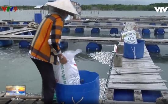 Cá chết trắng Long Sơn, người dân điêu đứng