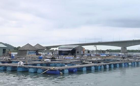 Nghi ngờ doanh nghiệp xả thải làm chết cá nuôi lồng bè tại Vũng Tàu