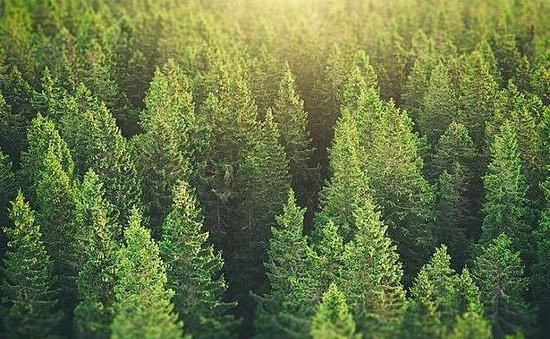 Phục hồi rừng có thể giảm 2/3 lượng khí thải carbon