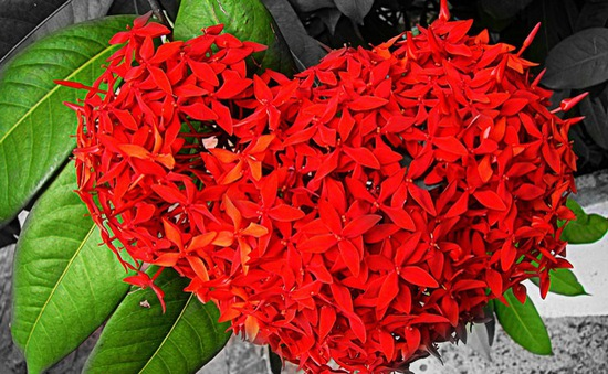 Những loài hoa mang may mắn và tài lộc trong ngày lễ Vu Lan