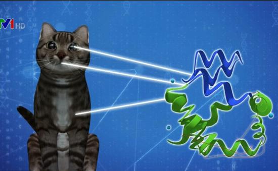 Phát hiện vaccine ngăn ngừa chứng dị ứng mèo