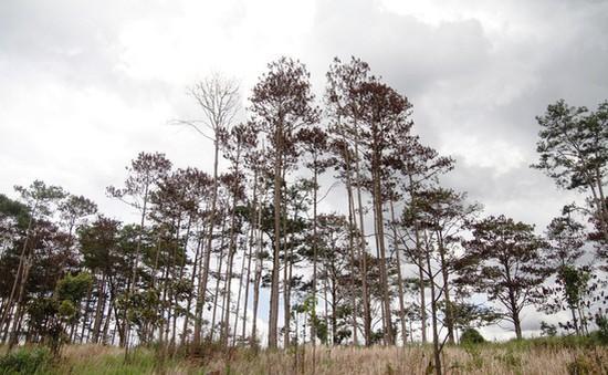 Bắt giam 6 đối tượng về hành vi hủy hoại rừng