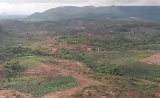 """Lúng túng giải quyết tình trạng """"xã hội đen"""" chiếm đất rừng"""