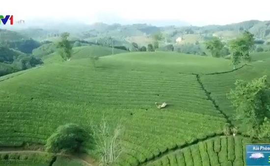 Khám phá vẻ đẹp của đồi chè Long Cốc (Phú Thọ)