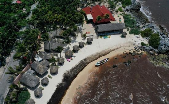 """Tảo biển hôi thối """"xâm chiếm"""" các bãi biển nổi tiếng dọc từ Mỹ tới Mexico"""