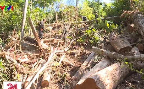 Bắt quả tang trưởng thôn tham gia phá rừng tại Đắk Lắk