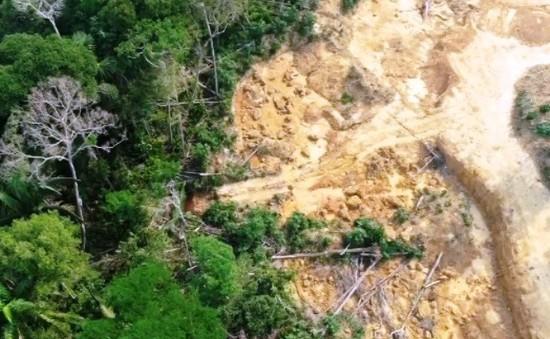 Chính sách của Brazil dẫn đến sự tàn phá rừng Amazon như thế nào?