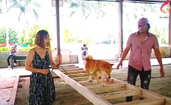 """Nhà sản xuất phản hồi về việc chó Nhật Bản vào vai """"Cậu Vàng"""""""