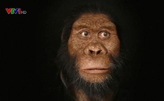 Hé lộ khuôn mặt lâu đời nhất của tổ tiên loài người