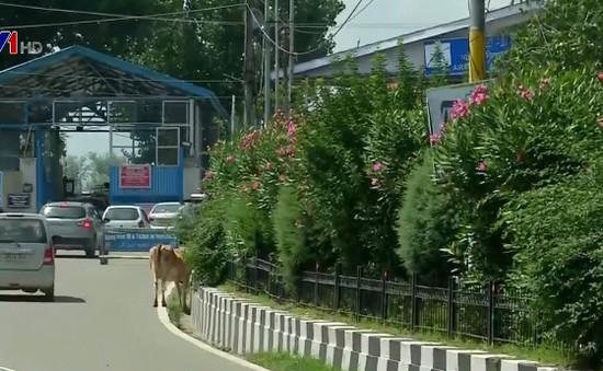 Ấn Độ hạn chế hoạt động công cộng tại Kashmir