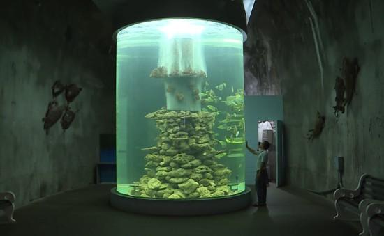 Viện Hải dương học Nha Trang: Bảo mẫu của những sinh vật đại dương ...
