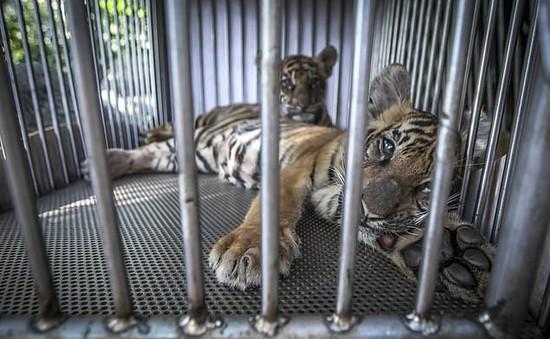 """Đau lòng hình ảnh động vật bị xích, """"sống để mua vui"""" cho con người"""