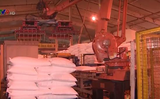 Đạm Cà Mau lần đầu tiên cán mốc 6 triệu tấn phân urê