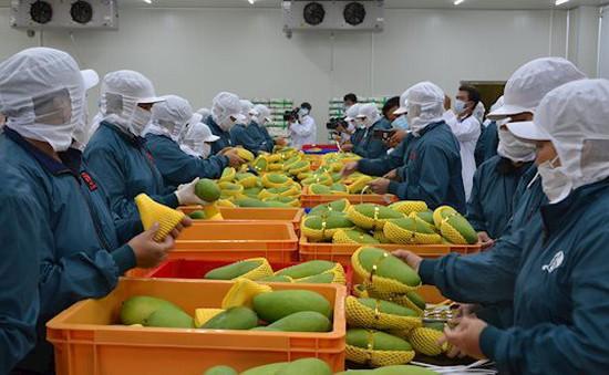 Từ hôm nay, EU kiểm dịch thực vật chặt chẽ với nhiều nông sản nhập khẩu