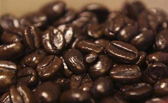 Giá cà phê Arabica và Robusta tăng